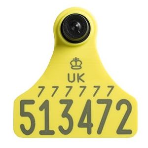Replacement Ultra Junior Primary Cattle Tag