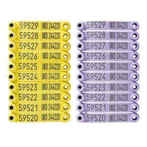 Bubblegum EiD Yellow and Bubblegum Visual Purple