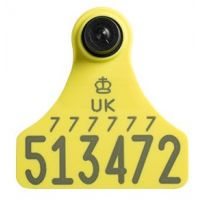 Replacement Ultra Junior Secondary Yellow Cattle Tags